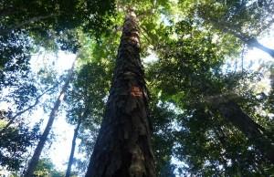 amazontree